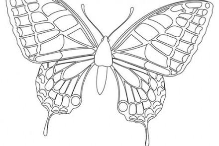 Coloriage papillon imprimer 1001 - Dessin d un papillon ...