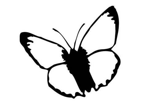 Coloriage de papillons coloriage d 39 un papillon n 1 - Coloriage d un papillon ...