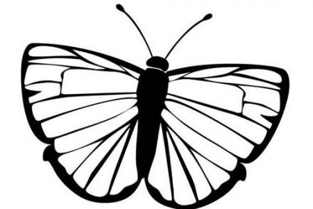 Coloriages-de-papillons-Coloriage-dun-papillon-N-10.jpg