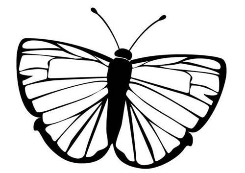 Coloriage de papillons coloriage d 39 un papillon n 10 - Coloriage d un papillon ...
