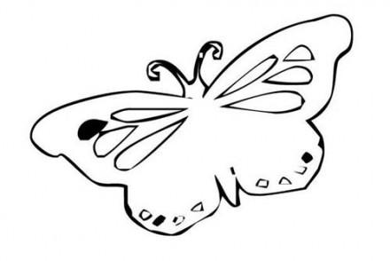 Coloriages-de-papillons-Coloriage-dun-papillon-N-12.jpg