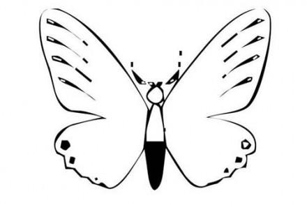Coloriages-de-papillons-Coloriage-dun-papillon-N-13.jpg