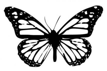 Coloriages-de-papillons-Coloriage-dun-papillon-N-3.jpg
