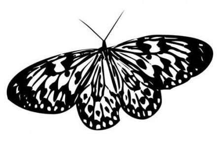 Coloriages-de-papillons-Coloriage-dun-papillon-N-7.jpg