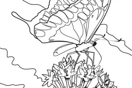 Coloriages-de-papillons-Le-papillon-se-pose-sur-une-fleur.jpg