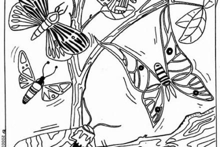 Coloriages-de-papillons-Nuee-de-papillons.jpg