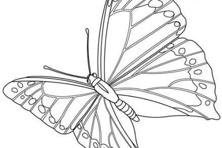 Coloriages-de-papillons-Papillon-en-plein-vol.jpg