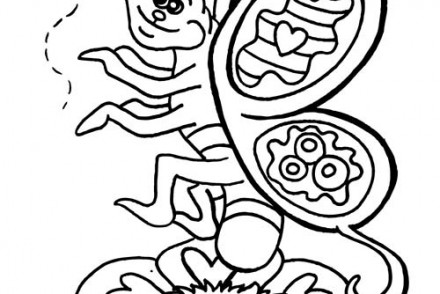Coloriages-de-papillons-Papillon-et-abeille.jpg