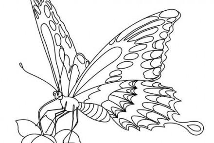 Coloriage de papillons coloriage d 39 un papillon n 2 - Une fleur dessin ...