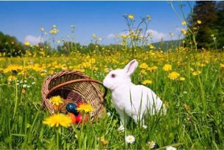 La-chasse-aux-oeufs-de-Paques-Chasse-aux-oeufs-de-Paques-en-pleine-nature.jpg